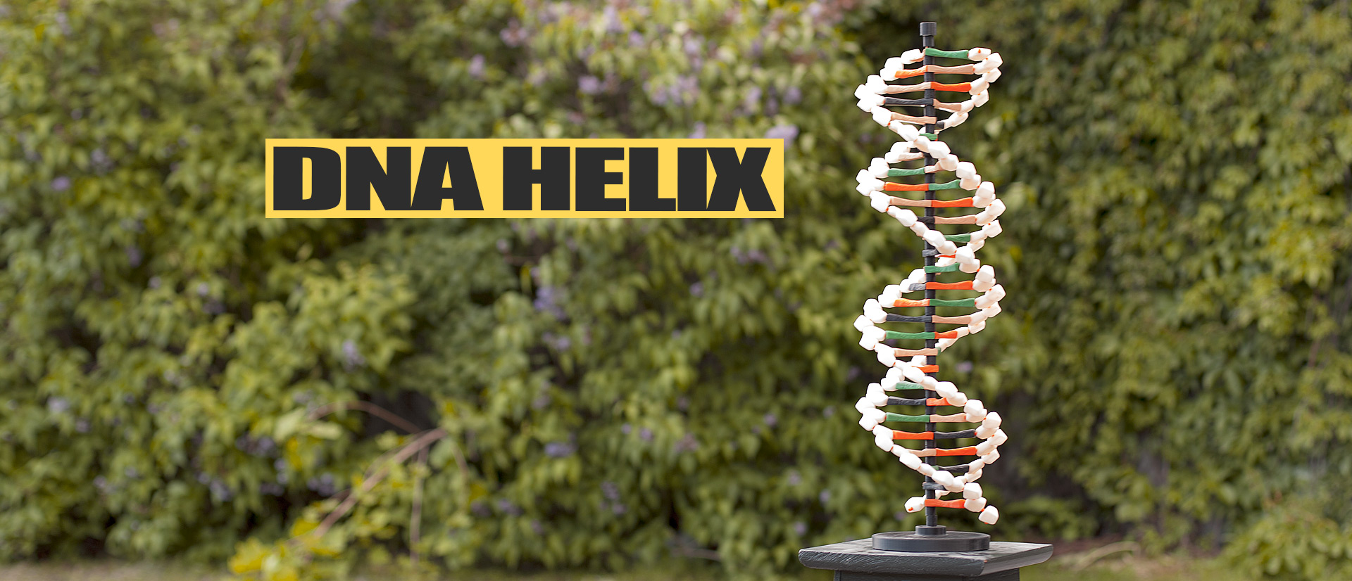 Justpressprint 3d printed Dna Double Helix